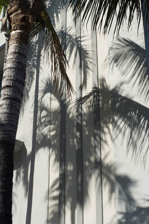 PALM trees shadow in South Beach Miami